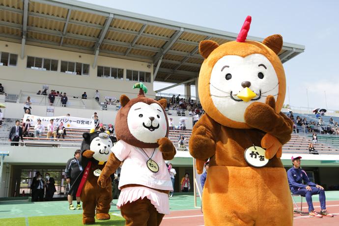 宮崎県のゆるキャラ「みやざき犬」3