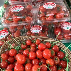 宮崎センコーアポロ株式会社のトマト